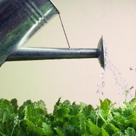 plant watering -watering plants -watering pots - watering plant