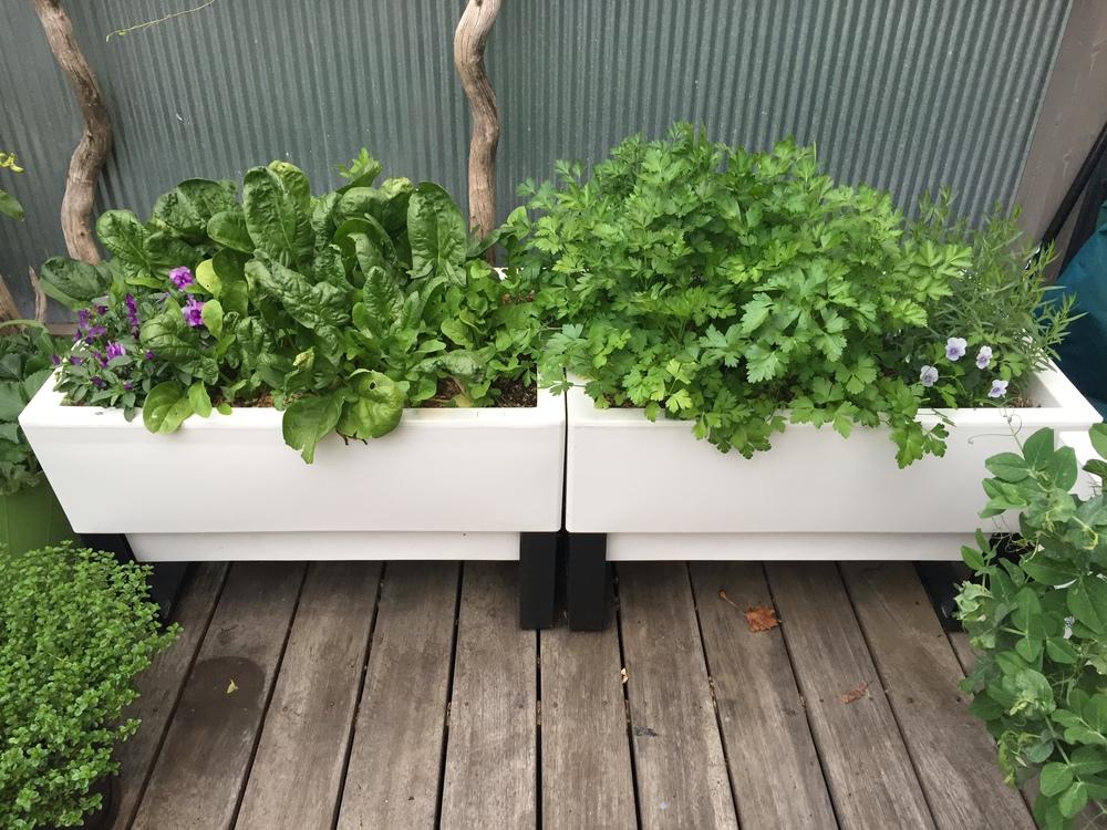 courtyard patio planters