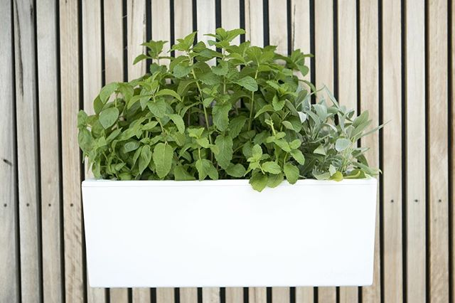 Soften up any stark walls at home with one of our minis (and maybe grow a few groceries while you're at it). The perfect solution for your interior decor ... and taste buds!  #selfwatering #selfwateringplanter #balconyplanter #glowpearplanter #summerplanting #whattoplant #greenwall #growvertically #verticalgarden #smallspacegardening #growyourown #locallygrownfood #ediblegardening #urbangardening #greenthumb #permaculture #goinggreen #foodisfree #homegrown #gardenersofinstagram #inmygarden #instafarm #plantstagram #gardenknowhow #gardenhelp #gardenadvice #produce #summer #kitchengarden #homegrown