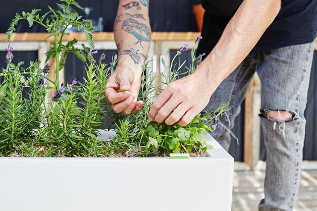The secret ingredient to every epic meal? Fresh-picked herbs from the garden. . . . .  #selfwatering #selfwateringplanter #balconyplanter #glowpearplanter #summerplanting #whattoplant #greenwall #growvertically #verticalgarden #smallspacegardening #growyourown #locallygrownfood #ediblegardening #urbangardening #greenthumb #permaculture #goinggreen #foodisfree #homegrown #gardenersofinstagram #inmygarden #instafarm #plantstagram #gardenknowhow #gardenhelp #gardenadvice #produce #summer #kitchengarden #homegrown