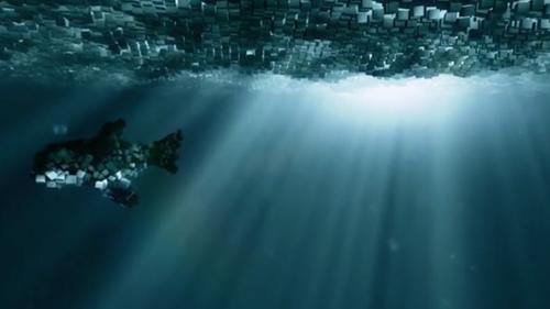 SQUARE SHARK