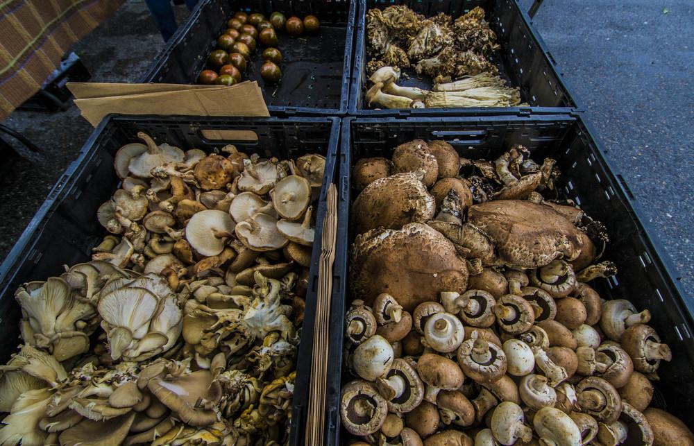 doremushrooms.jpg