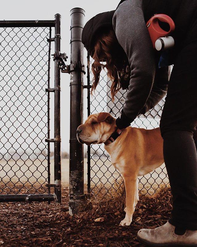 Dreary dog parks. . . . #sharpei #torontosharpei #dogpark #torontophotographer #torontodogs