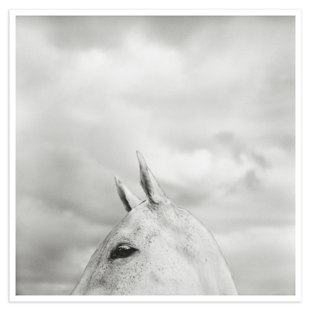 horse023_a copy_HC.jpg