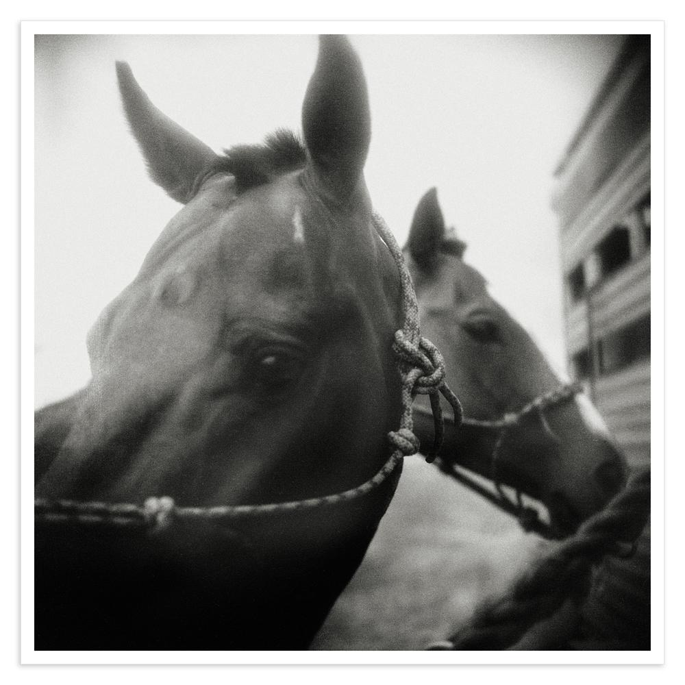 two polo poniesWIP_MS.jpg