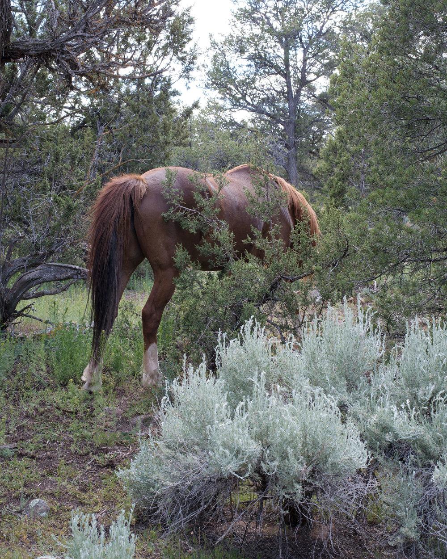 Wild-Horse,-Pine-Springs,-AZ.jpg