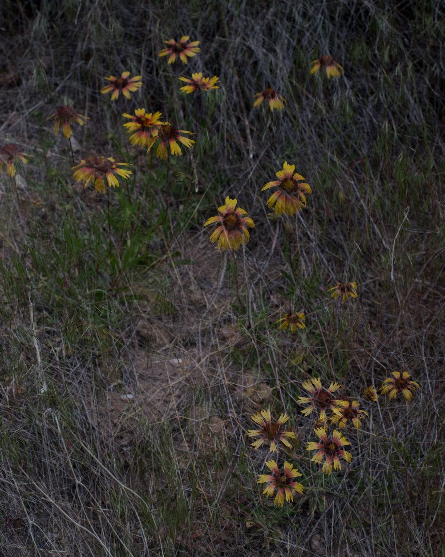 Untitled-83,-near-Los-Alamos,-NM.jpg