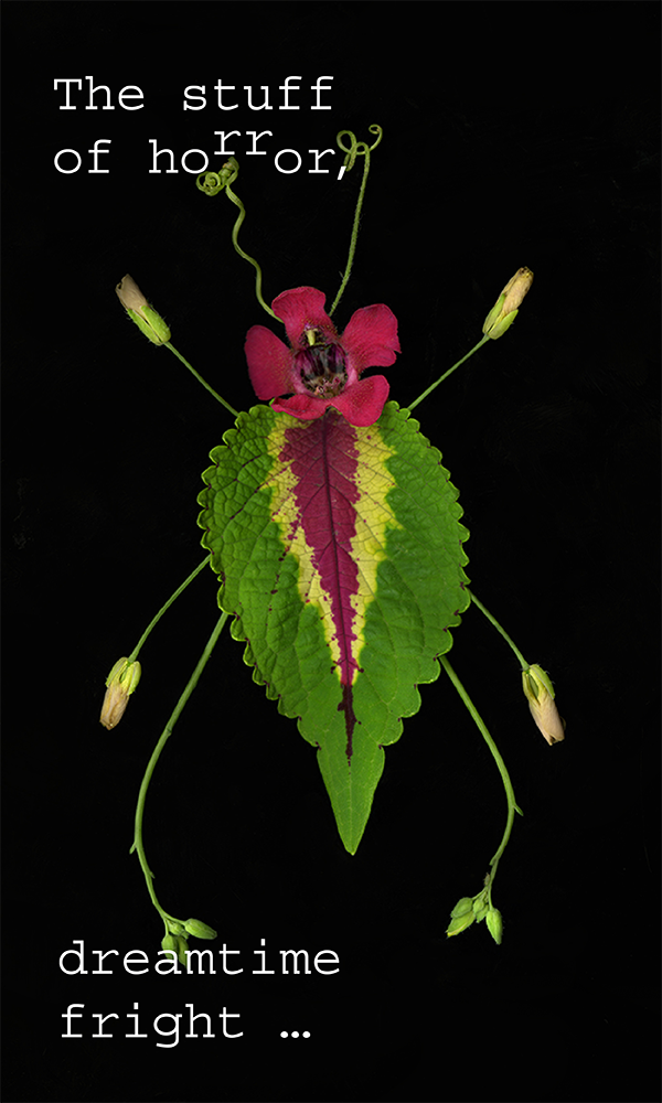 600x1000_InsectPoem-04.png