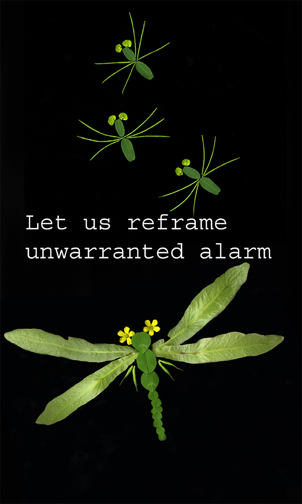 600x1000_InsectPoem-06.png