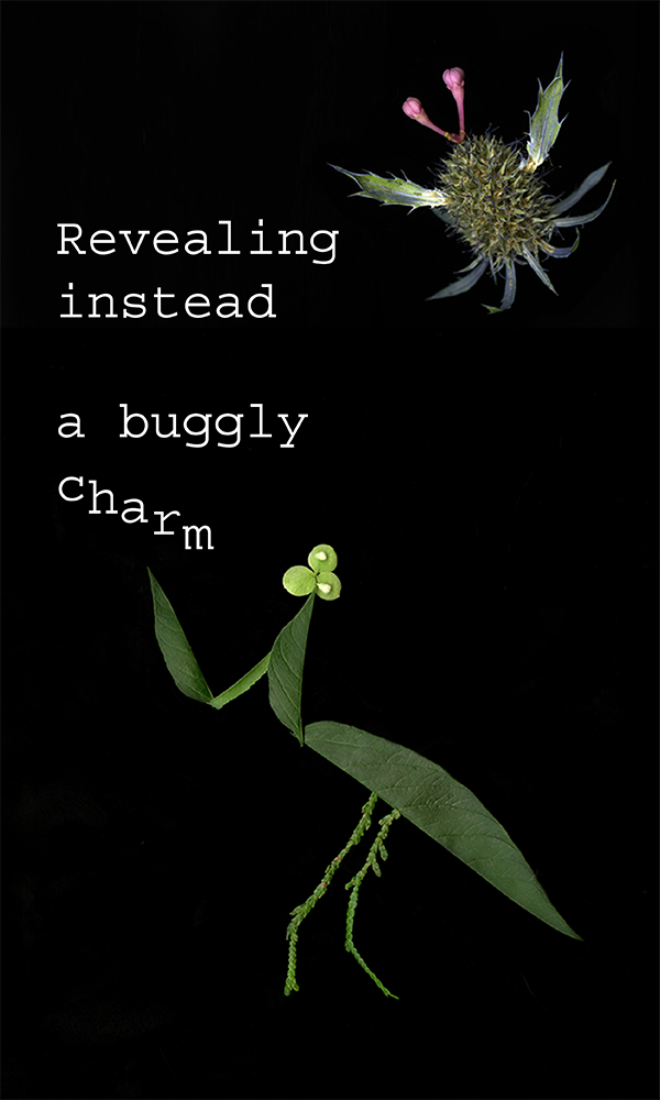 600x1000_InsectPoem-07.png