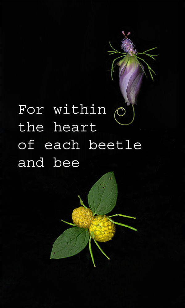 600x1000_InsectPoem-08.png