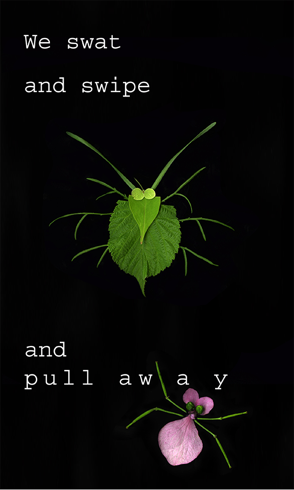600x1000_InsectPoem-01.png