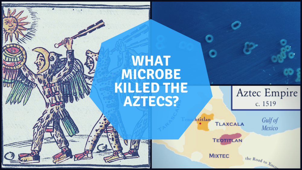 Image of Aztec Artwork:  The Field Museum Library, Public domain, via Wikimedia Commons.  Microbe Image:  Centers for Disease Control and Prevention, Public Domain.  Map:  Badseed based on work by historicair which in turn was based on Madman2001's work. [GFDL (http://www.gnu.org/copyleft/fdl.html), CC-BY-SA-3.0 (http://creativecommons.org/licenses/by-sa/3.0/) or CC BY-SA 2.5 (https://creativecommons.org/licenses/by-sa/2.5)], via Wikimedia Commons.