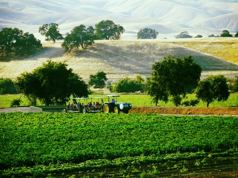 California's beautiful farm country. Photo courtesy of Jenny and Pearl.