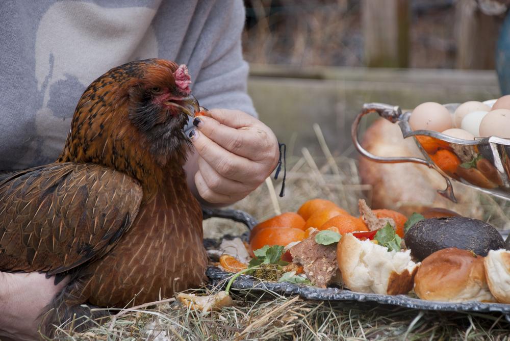 Chick 3.jpg