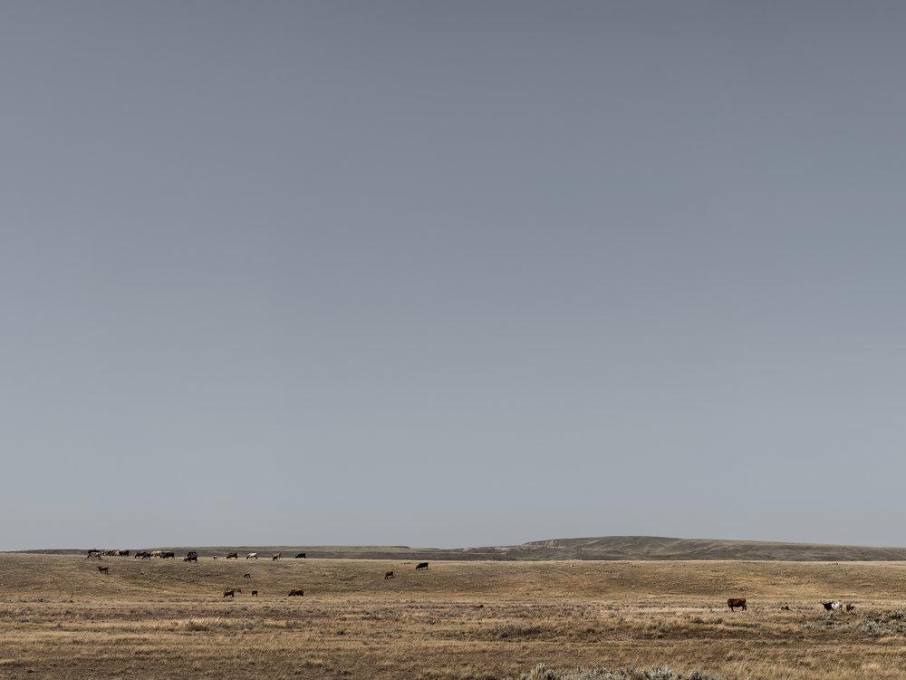 Alberta Longhorns (2013)