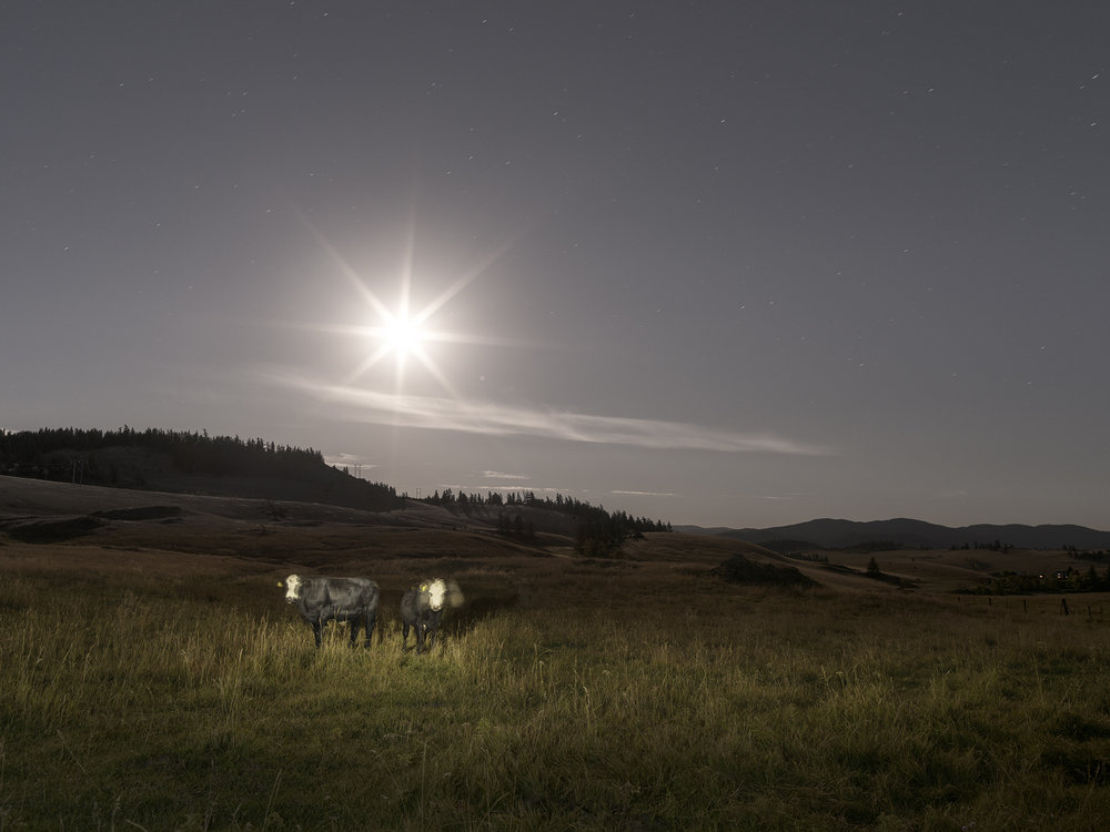 Twins Under Moonlight (2016)