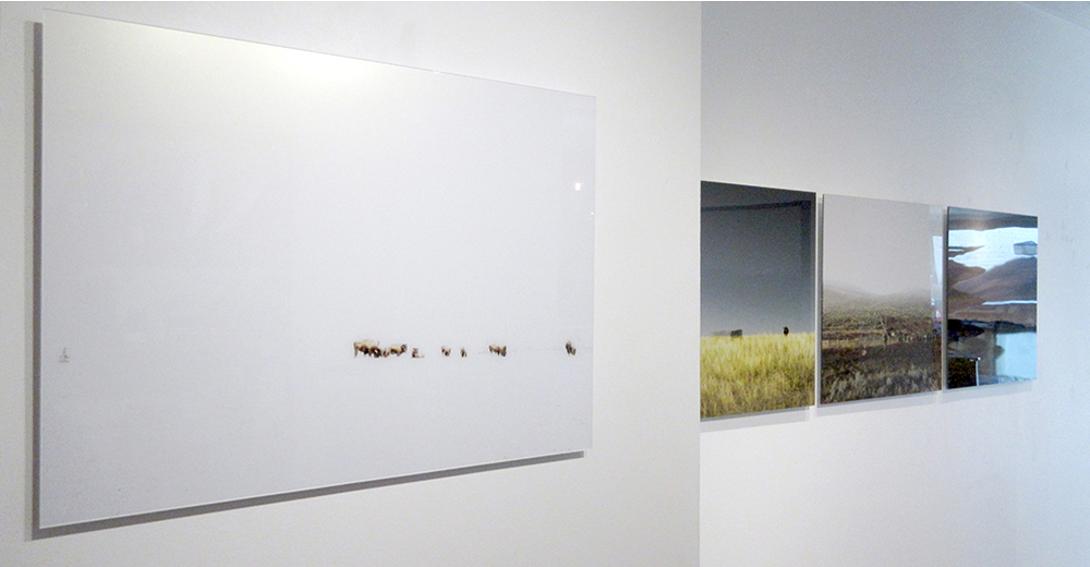 HERD (2017), Kimoto Gallery, Vancouver (photo credit Chris Fadden)