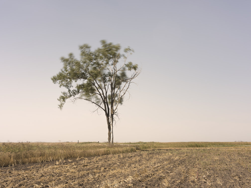 Broken Tree in Wind (2018)