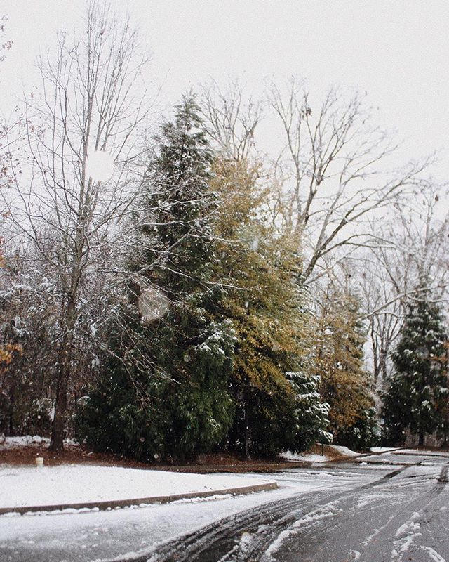 Livin' in a snow globe 🌨❄️🐇