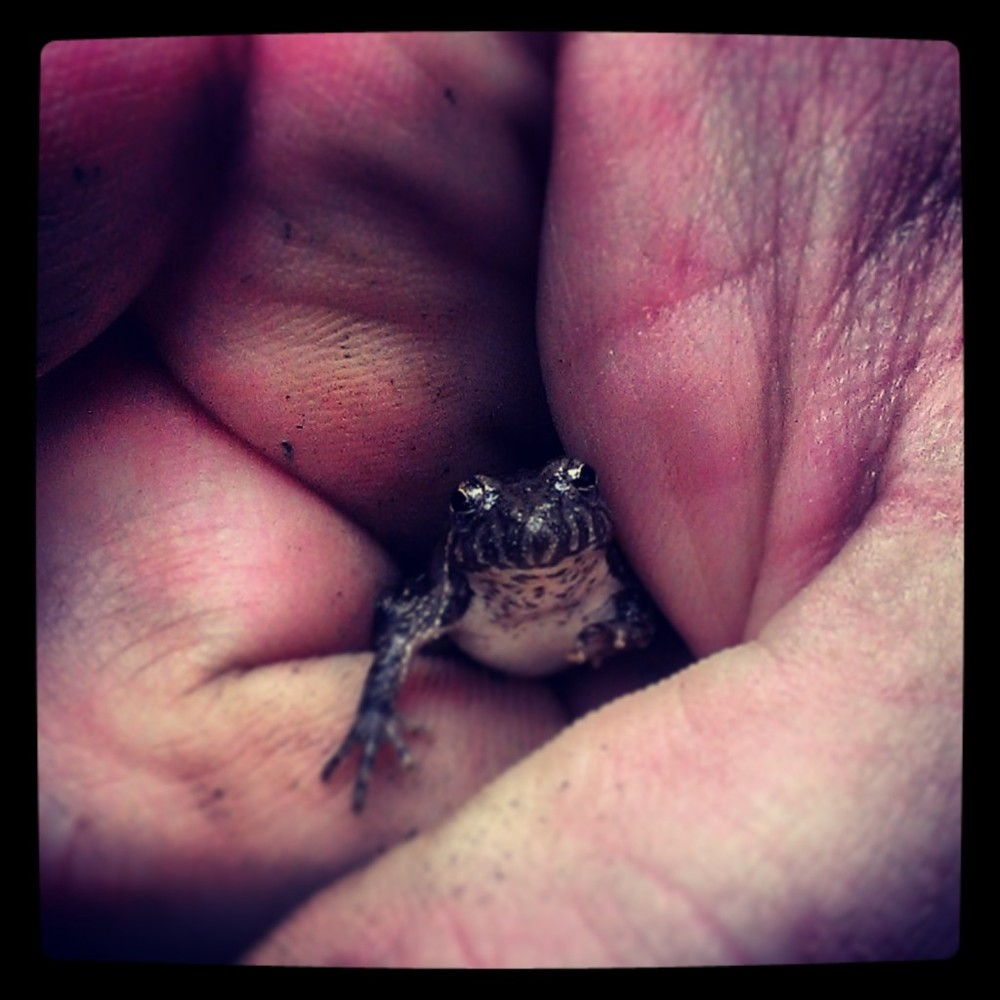 Tree Frog Baby