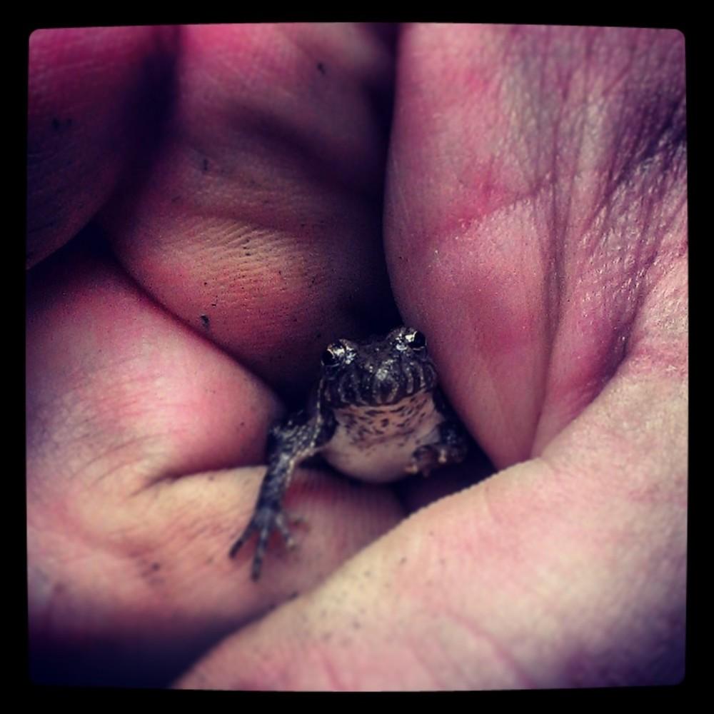 Tree Frog Baby