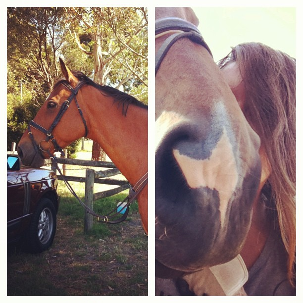 Life's pretty dandy when you wake up to this giant. #horse #love #justnow