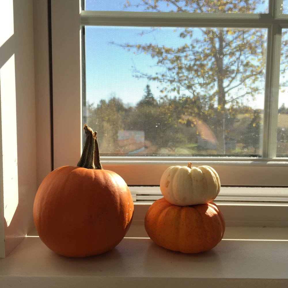 pumpkins in window