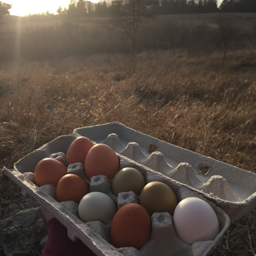 eggs in the sun