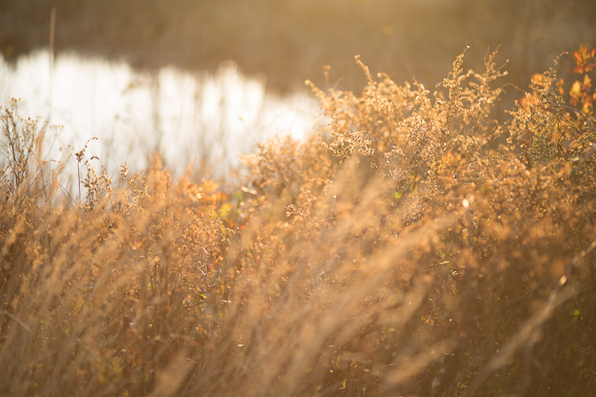 Sunny weeds by pond
