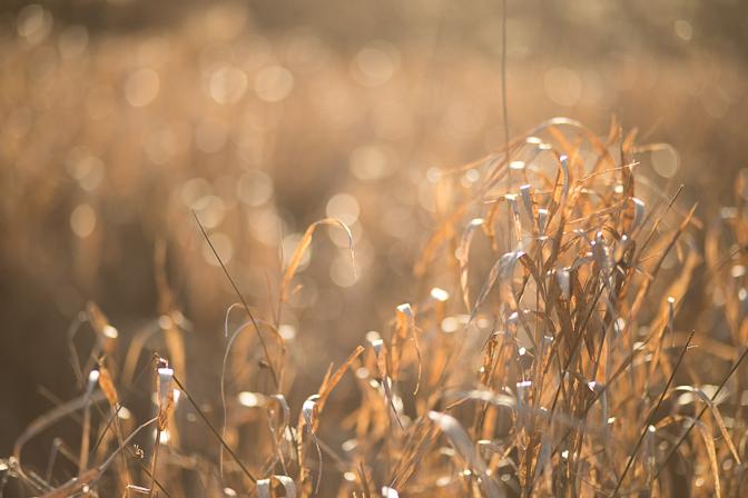 Sunny grass