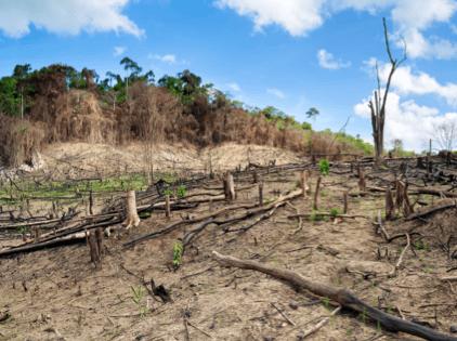 Landnutzungsveränderung
