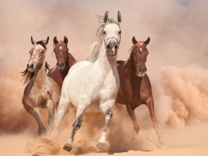 In was für einer Welt möchtest Du Leben?Lustaufzusatteln? Die Pferde stehen bereit.