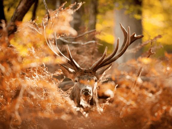Mit einer  Exkursion  in den Wald die Vielfalt dieses wunderbaren Lebensraumes erleben und dessen Bedeutung verstehen.