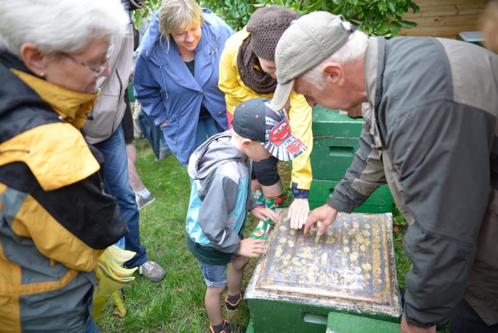 FortschRitter 092 Biene.JPG