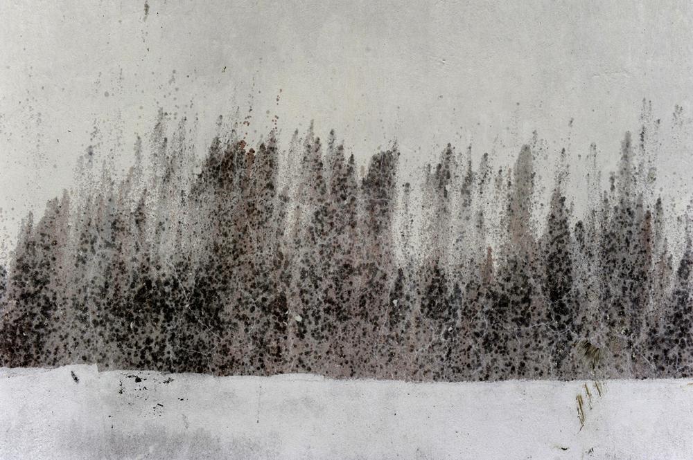 kwp-winter scape-1.jpg