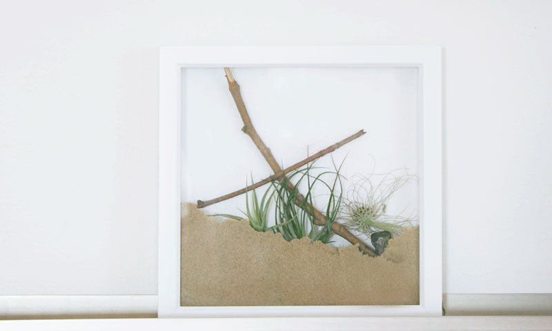 Airplant Shadowbox