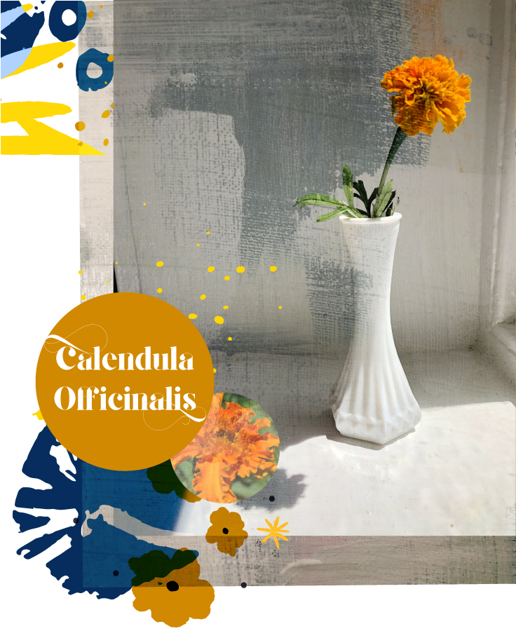 garden_marigold.jpg