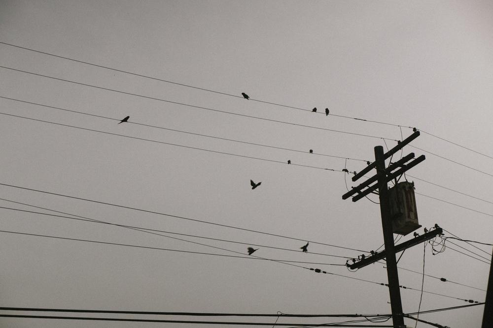 Parrots of Culver City