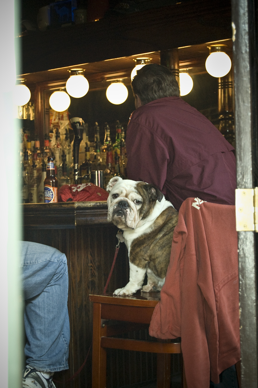 Dog in New Orleans Bar - 2009