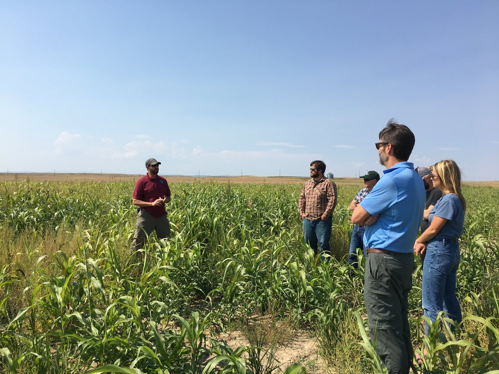 Matt Comer of the MT BLM and MSU participants in a former crop field undergoing restoration to native range.