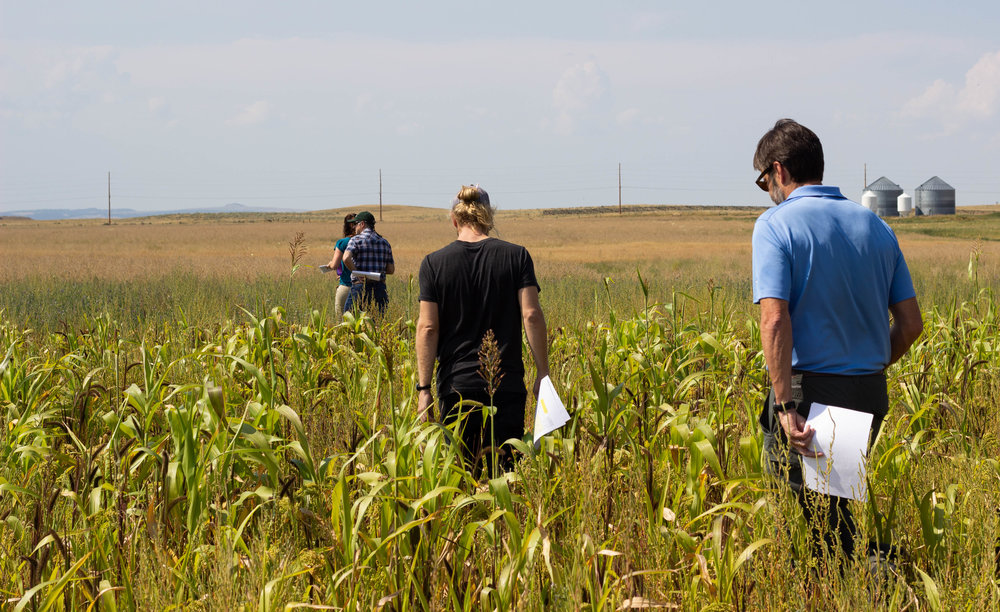grasslands group in cover crop.jpg
