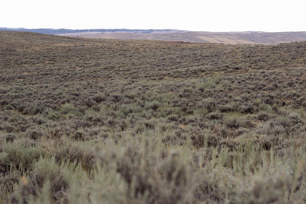 Sage steppe.jpg