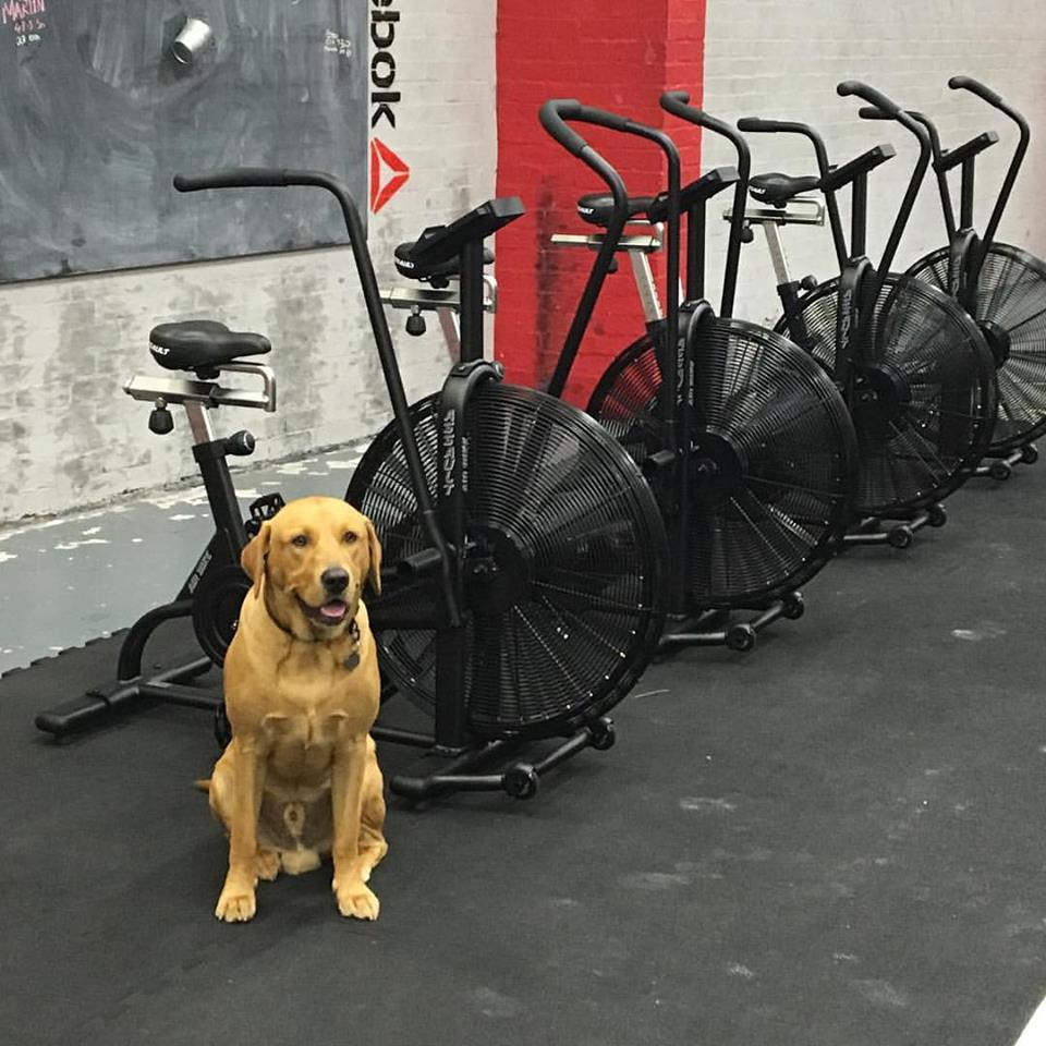Our gym comes with a puppy... Just saying
