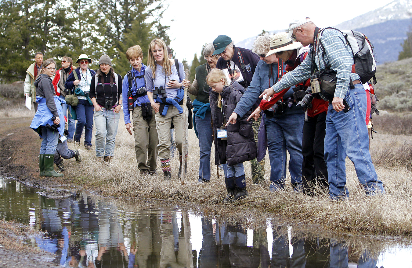 Spring into Yellowstone - Birding and Wildlife Festival