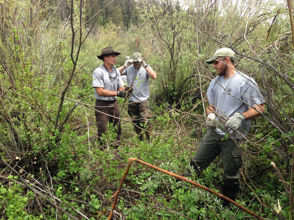 Curtis Hendricks (left) with other Idaho Department of Fish and Game employees clear willows on the Duck Creek Ranch. (Photo GYC.)