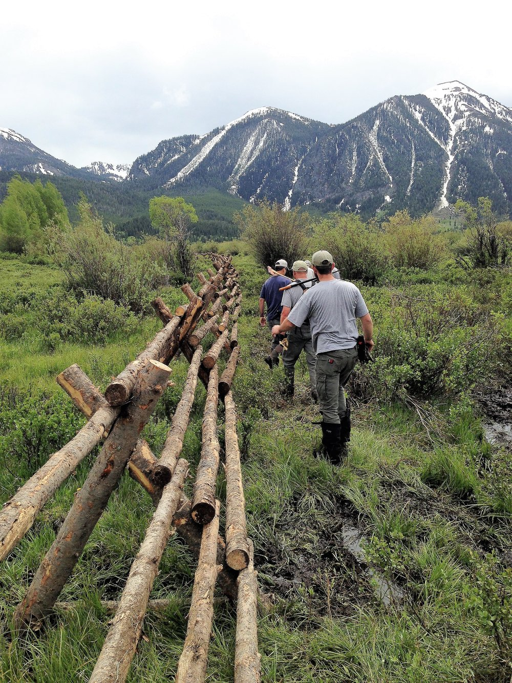 The Idaho Fish and Game crew walk the newly installed jack fence, which will help keep cows from getting stuck in the Duck Creek bogs and becoming an easy meal for grizzlies. (Photo GYC.)