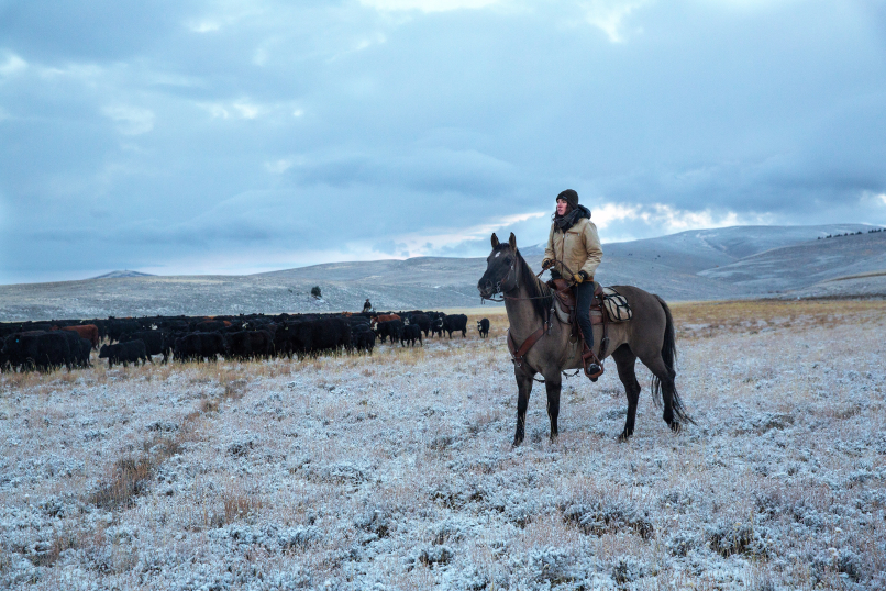 150 miles southwest of Tom Miner Basin, a range rider patrols the Centennial Valley in 2016. Range riders begin work in Centennial Valley in mid-May and work through mid-October. The riders manage nine herds of cattle for five different ranches in the Centennial Valley. Wolves and grizzly bears are abundant throughout the valley.