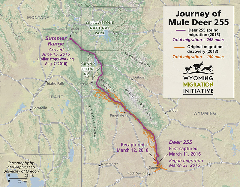 Deer 255's amazing migration across the state of Wyoming and into Idaho. (Map courtesy of Wyoming Migration Initiative.)