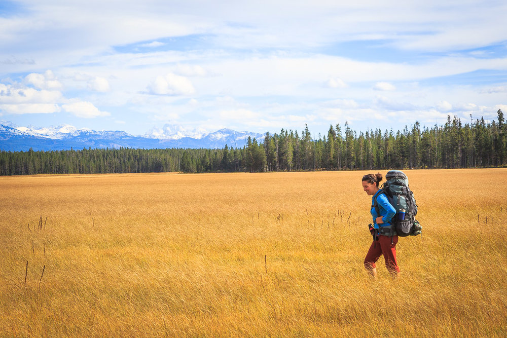Yellowstone wolf biologist Kira Cassidy backpacking through wolf habitat in the Bechler area of Yellowstone National Park. (Photo Josh Metten.)